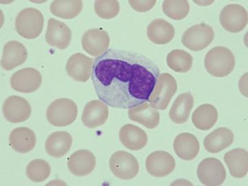 白血球について、調べよう!!